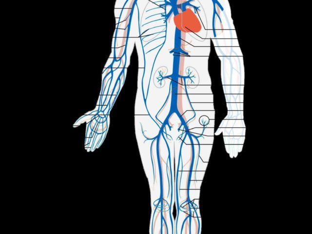 human body anatomy physiology unity form and function saladin mcgraw ...