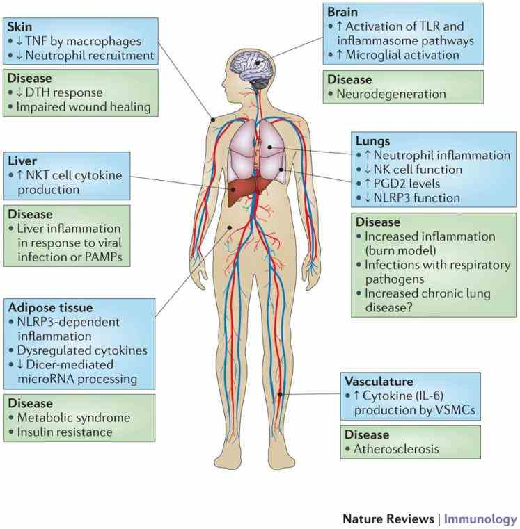 Immune System Function And Organs Pictures Wallpapers