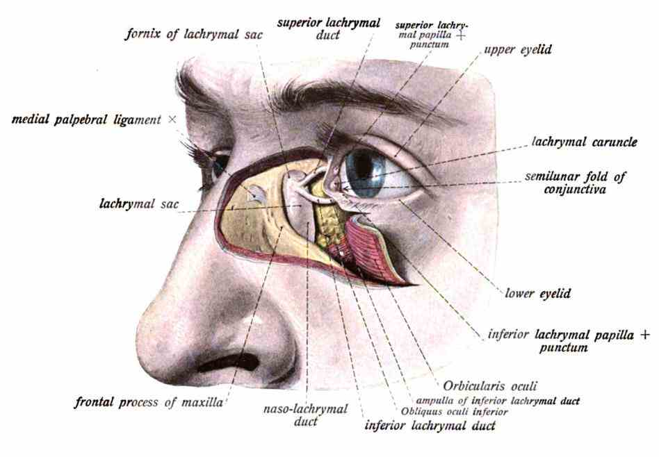 jul the nasolacrimal drainage system serves as a conduit for tear flow from external eye to nasal cavity it