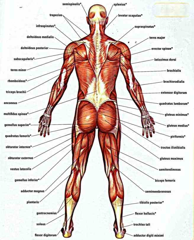 low pain a guide for coaches and athletes on types low Lower Back Muscle Anatomy back pain a guide