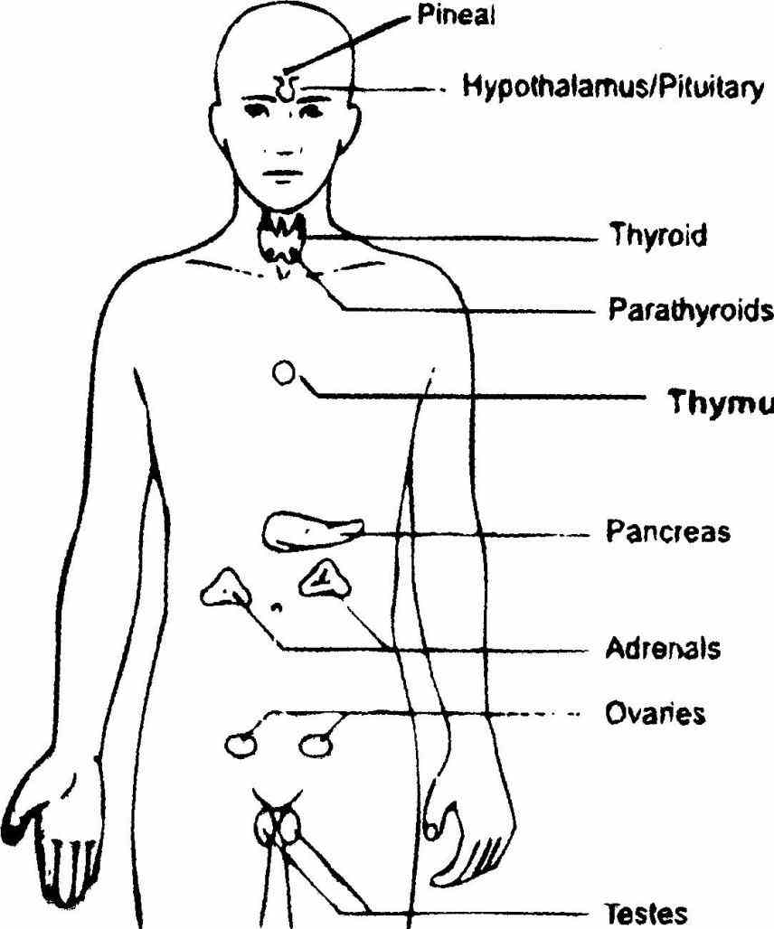 lymph nodes and learn more about medical anatomy are located in many places the lymphatic system throughout body de
