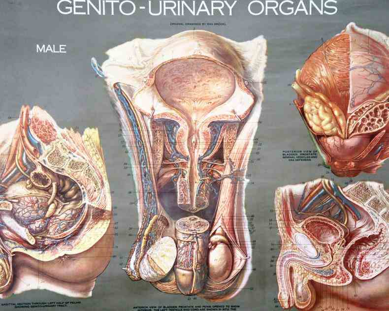 most mammals we nurse our babies have highly learn Female Human Anatomy Organs about human anatomy including organs facts