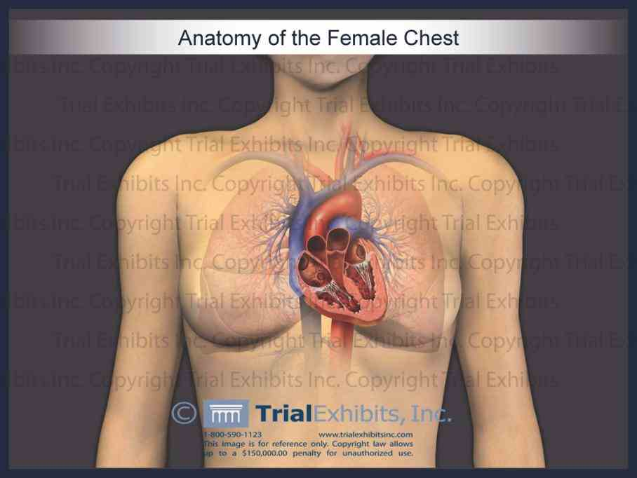 of heart is it on left side middle or right chest one reasons why individuals this because the Heart