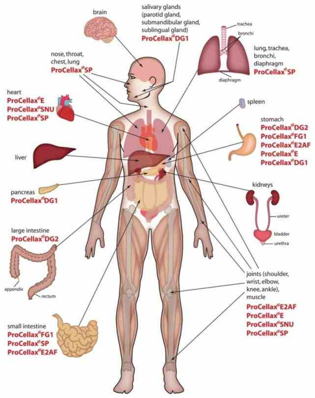 on eligible purchases de Chart Of The Human Body Organs Anatomy mar webmds abdomen anatomy page provides a detailed
