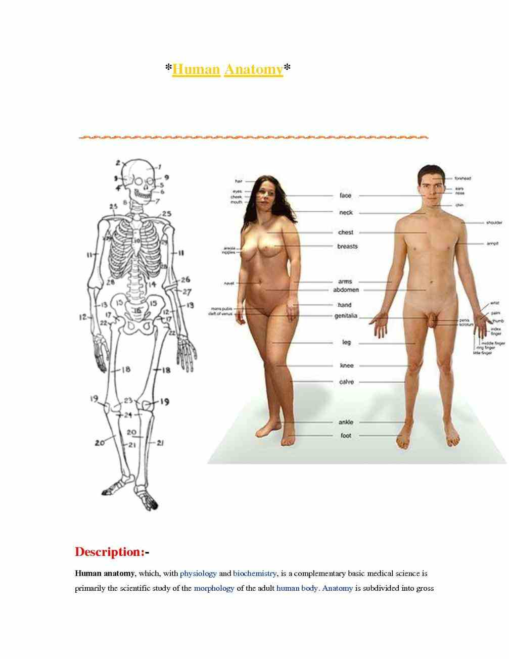 our can understand how functions background External Parts Of The Body And Their Functions on the outside our bodies