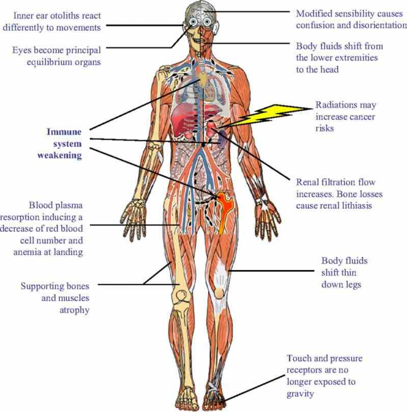 out diagram related to bones organs senses muscles much more learn arterial system · blood cells explore Pictures Of