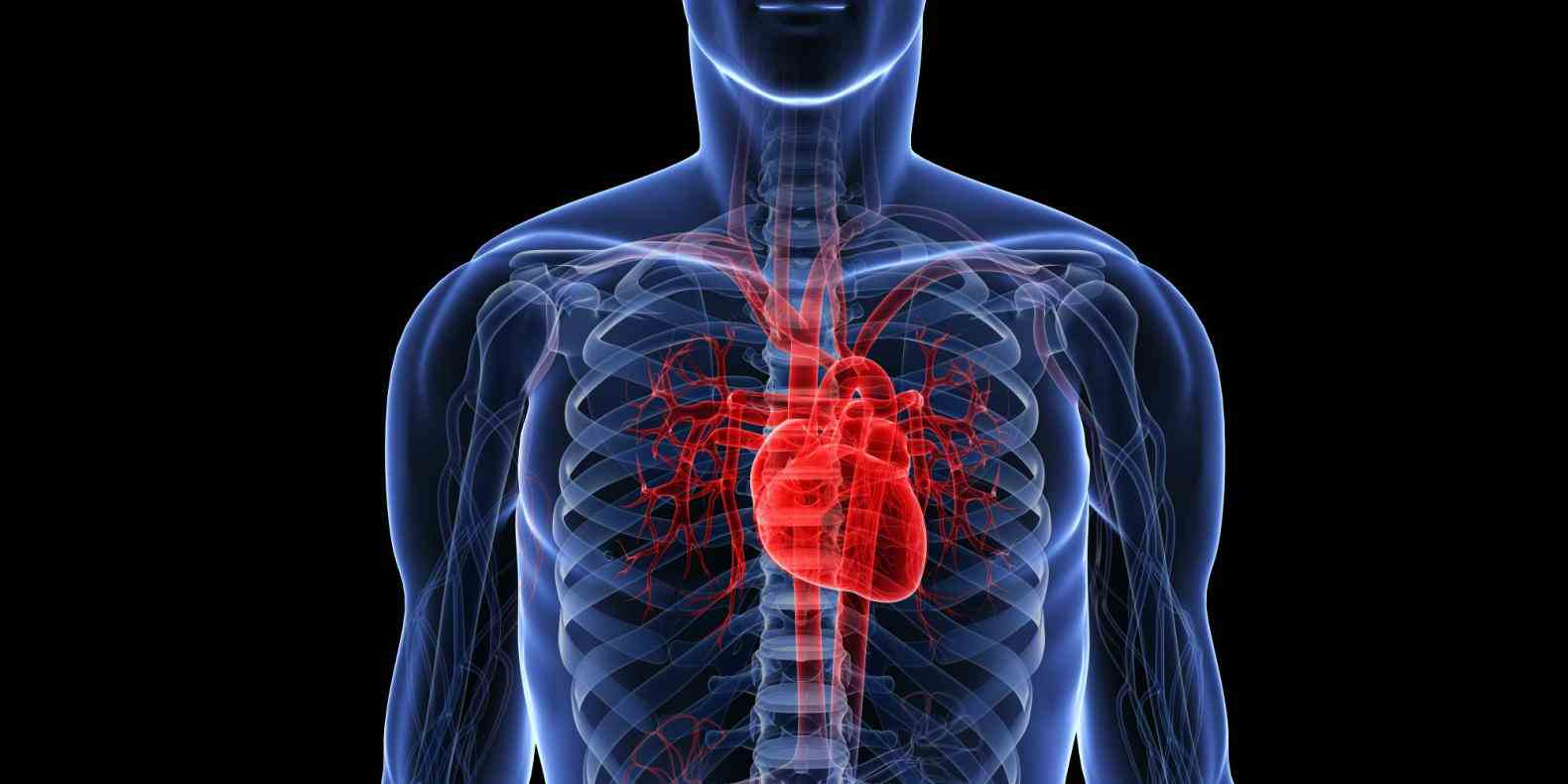 pain in your chest or any other part of body…its always best to  the Heart Location In The Human