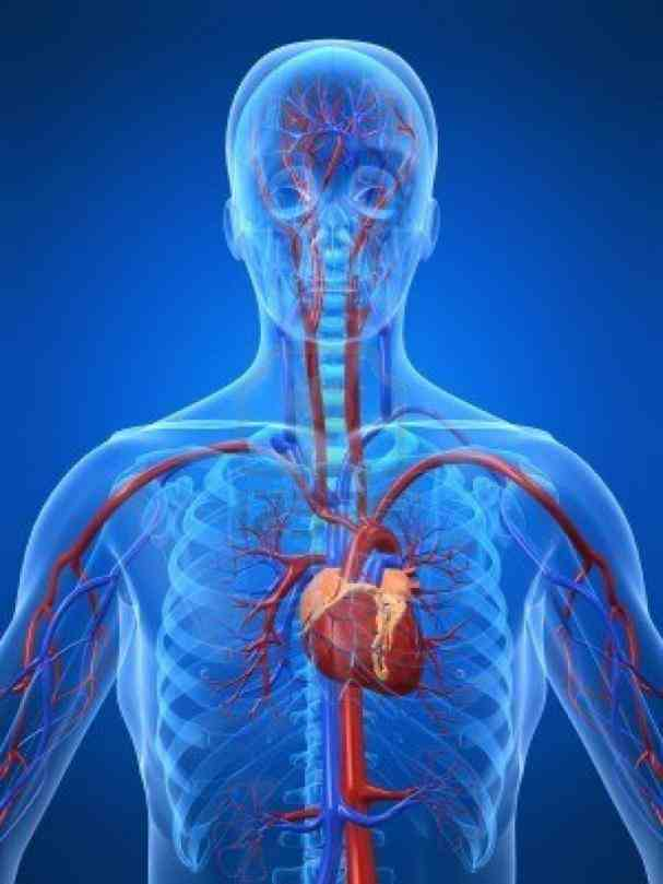 pain in your chest or any other part of body…its always best to  the Location Of Human Heart In