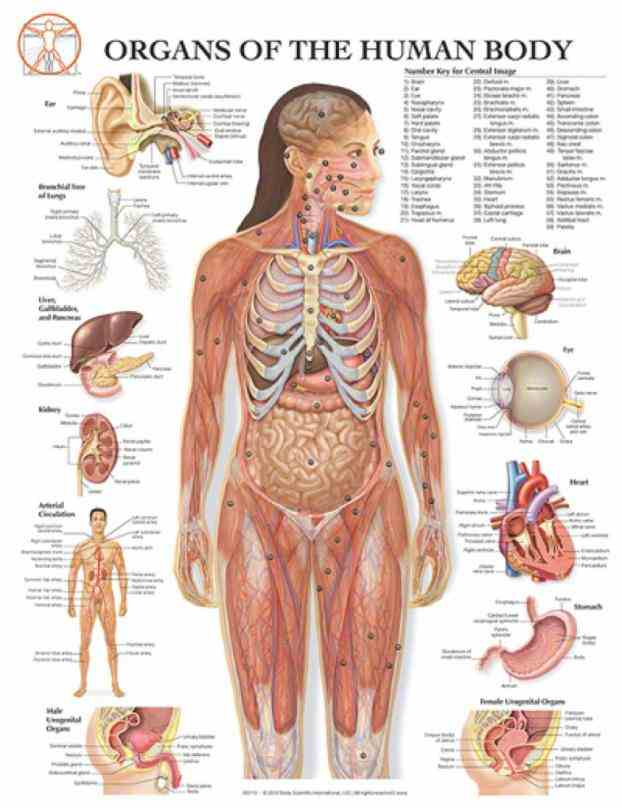 para what parts make up the female anatomy reproductive includes inside and outside body related content de Female Human
