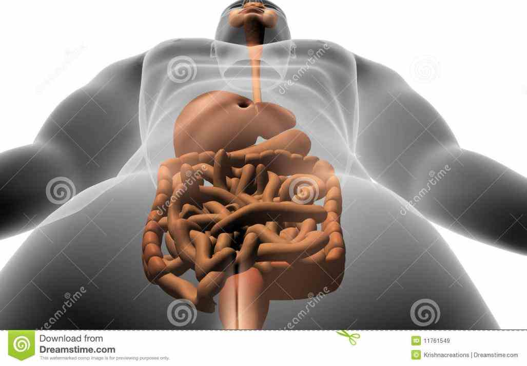 picture Image Digestive System Human Body of d image the human digestive system inside body stock photo images and