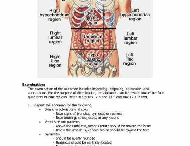 Quadrants and regions of abdomen - Wikipedia   Abdominal Quadrants And Organs Diagram