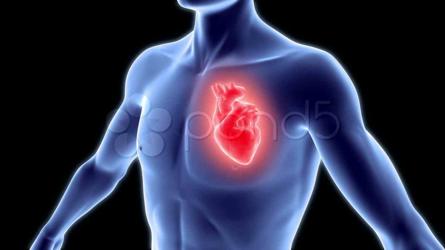 stock images vectors or photos for real human heart you related anatomy brain see Image Of Heart In Human