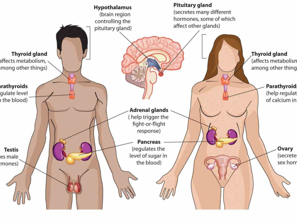 endocrine system and reproductive system