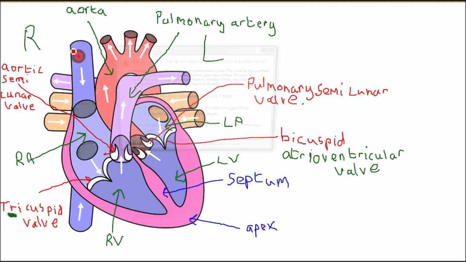 Parts Of The Human Heart And Their Functions Pictures Wallpapers
