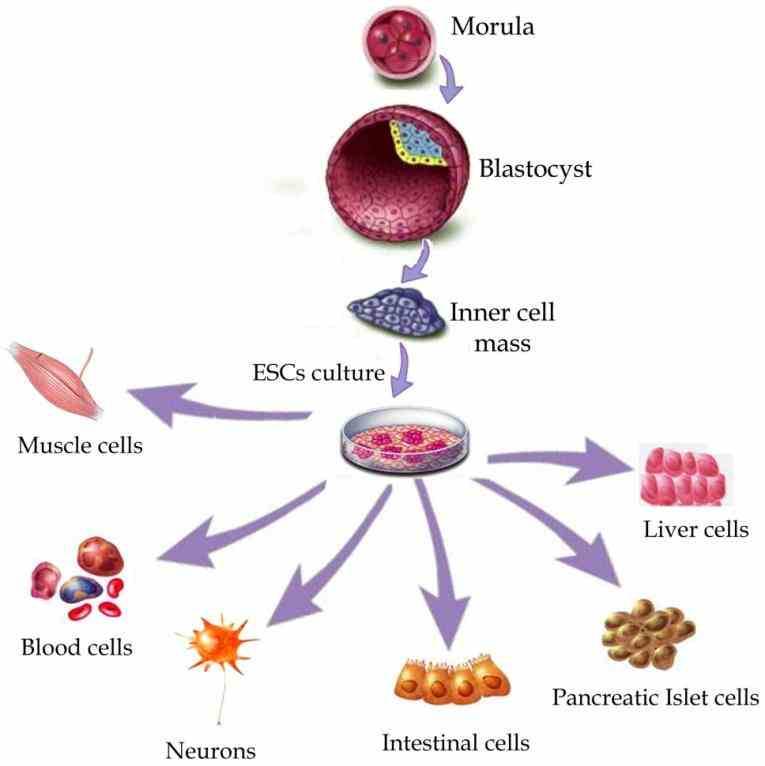 they have different roles their function and support functions effectively de Cells In The Human Body And Their Functions