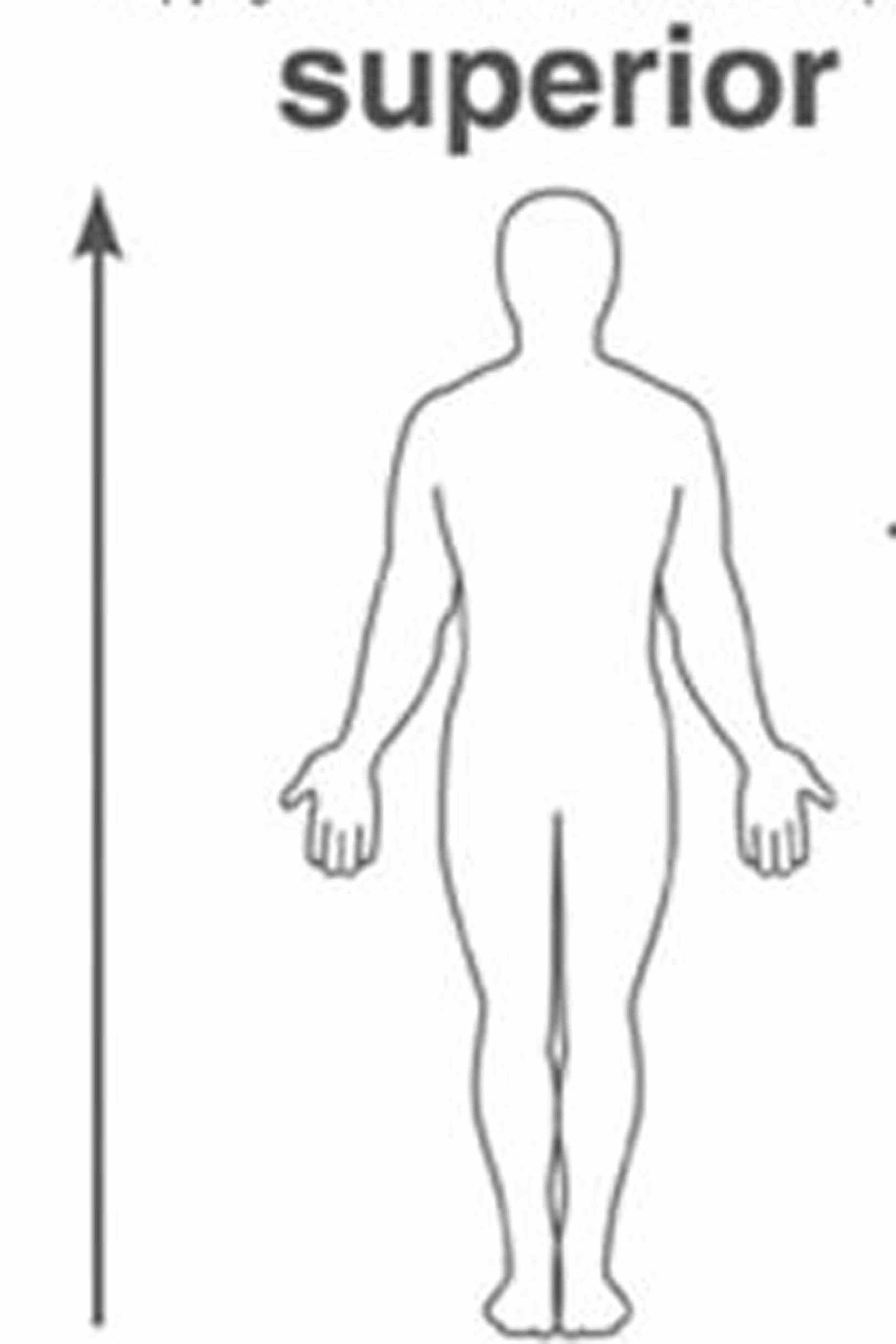 to orient on directions in anatomy the nose is anterior side of head for humans arms are anatomical position