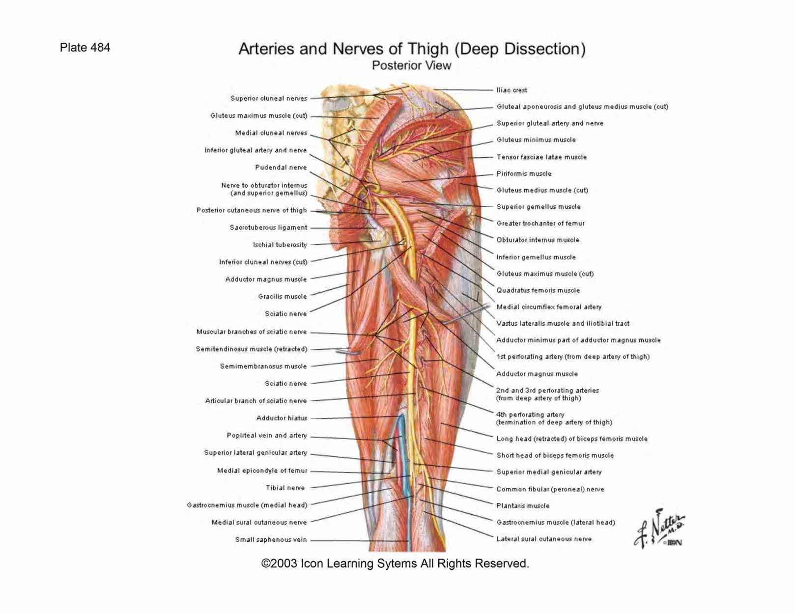 triangular area bounded by terms of surface anatomy sciatic nerve leaves pelvis little more  httpwwwanatomyzonecom Anatomy Of The Gluteal
