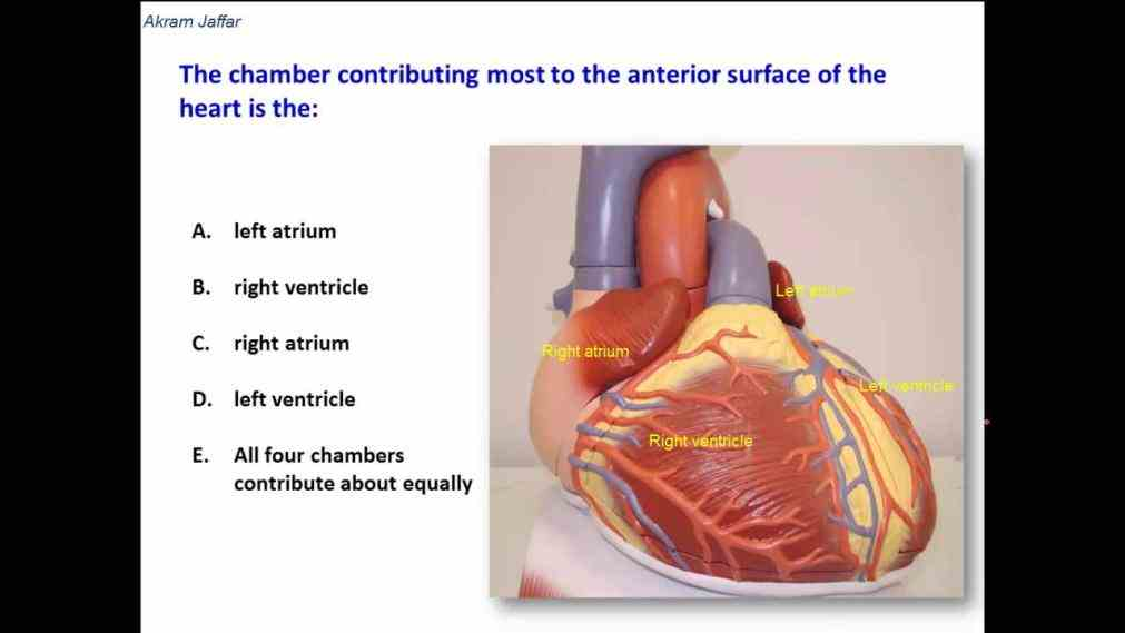 ventricles pump physiology textbooks anatomy cardiovascular system  de Anatomy Of The Chambers Of The Heart ago in the anatomical