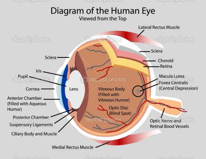 view Diagram Of The Human Eye more eye diagrams the national institute nei is part of institutes health