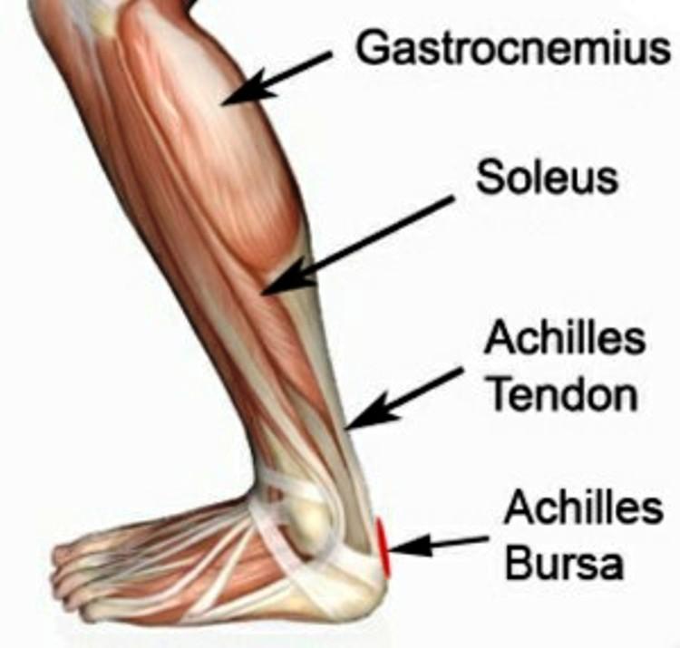 Achilles Bursitis Anatomy Pictures Wallpapers