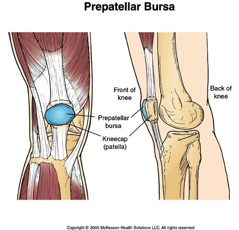 Prepatellar Bursa Pictures Wallpapers
