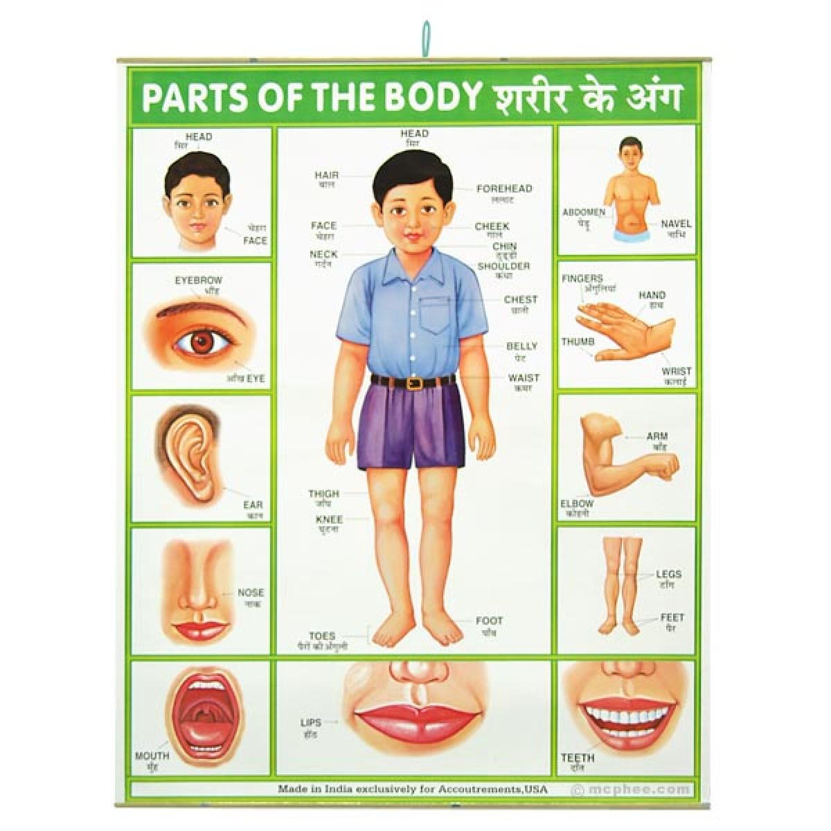 man body parts - HD1200×1200