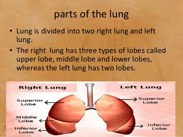 Lung and lung cancer symptoms 1827277