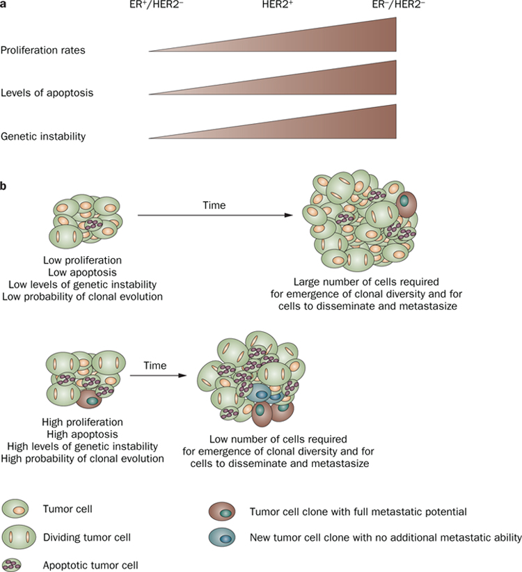 Tumor size and survival in breast cancer 172772