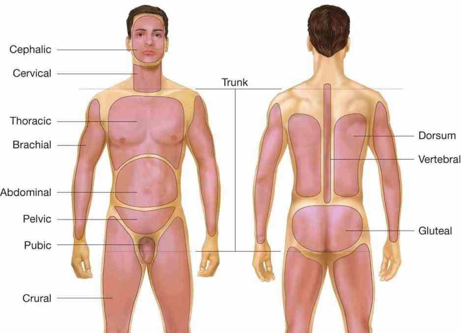 The Body Anatomy fev anatomical terms of location are vital to understanding and using equally the sternum is anterior