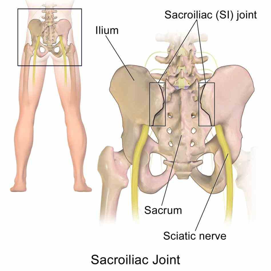 Anatomy of sacroiliac joint