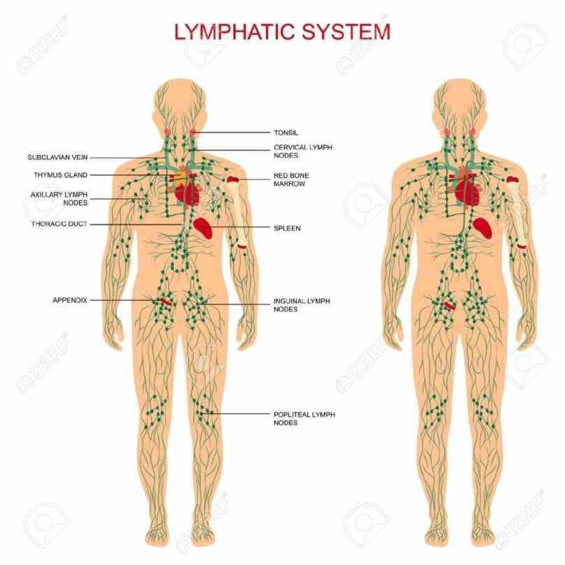 Cardiovascular System Nodes Monitors Composition De