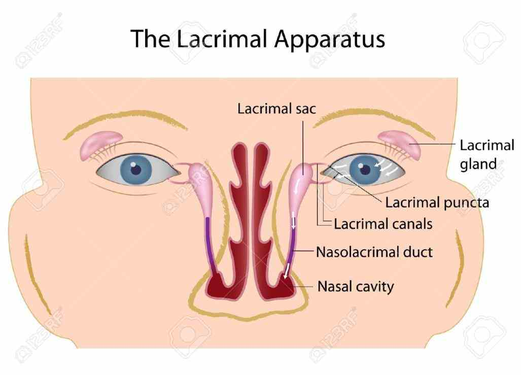 Anatomy Of Lacrimal Gland Pictures Wallpapers