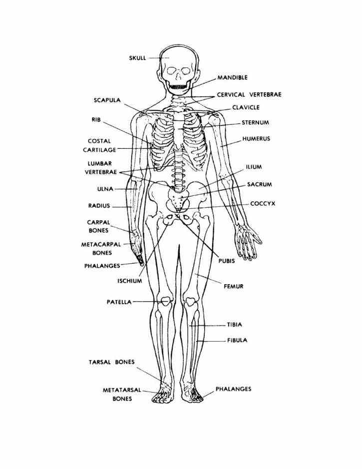 human skeleton diagram labeled unlabeled and blank detailed diagrams health medicine anatomy detailed Labelled Human Skeleton human skeleton diagrams
