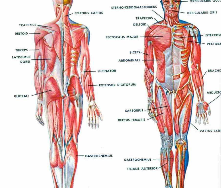 Gemütlich Itec Diploma In Anatomy And Physiology Zeitgenössisch ...
