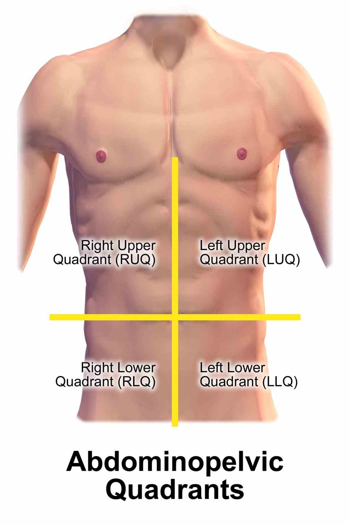 Picture Of Abdominal Quadrants Pictures Wallpapers