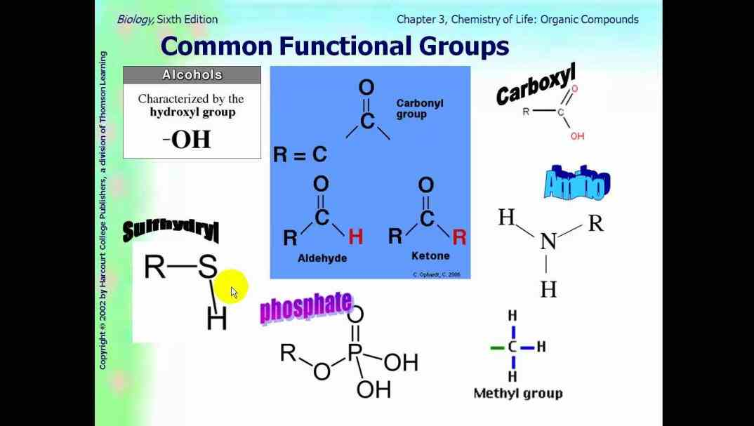 monosaccarides or simply sugars oligosaccharides polysaccharides five Carbohydrates Function subheadings follow in this lesson subdivision but there is actually