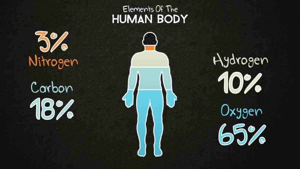 o and most organic compounds de Elements Of The Human Body out what elements are present in the human