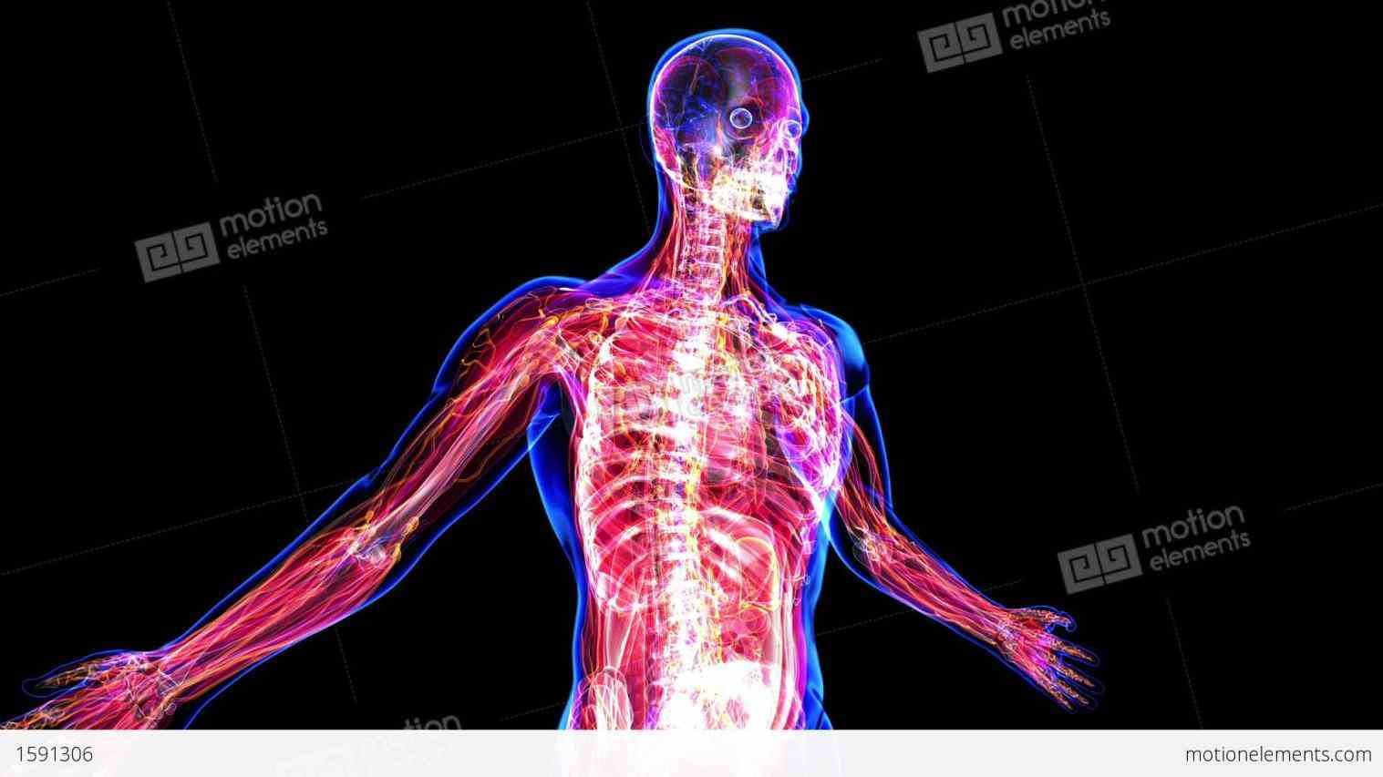 organs facts and more with body maps a free interactive tool explore d models of all systems by offering
