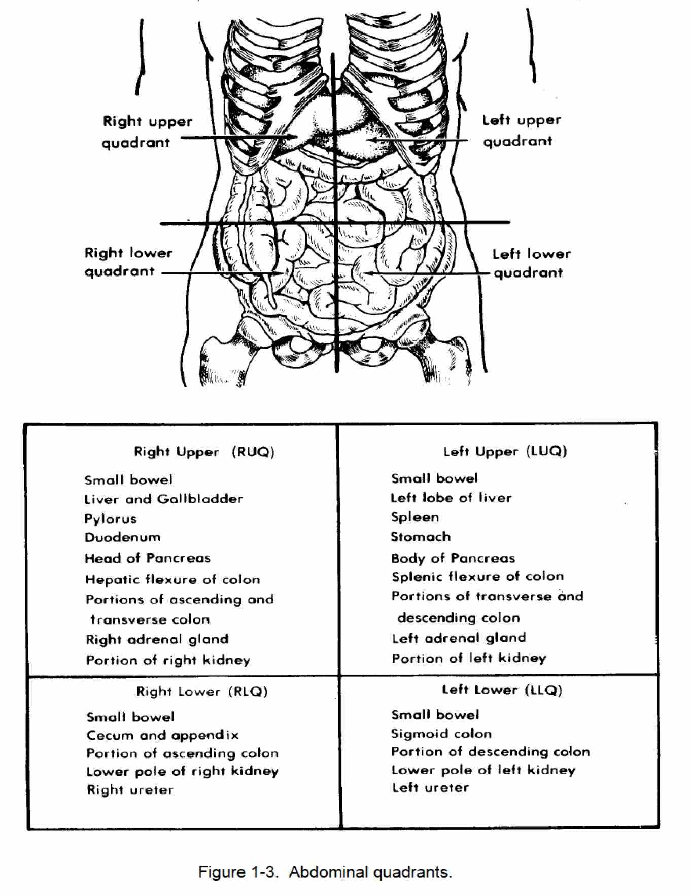 provides a detailed image and definition of the learn about its function parts abdominal de Picture Of Abdominal Quadrants