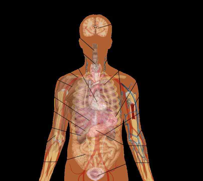 range of human body pictures and anatomy diagrams here at check out diagram related to bones organs senses muscles