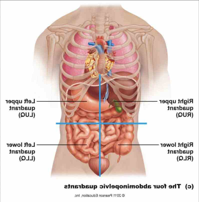 the viewer gets to see organs just as find Picture Of Abdominal Cavity the perfect abdominal cavity stock photos