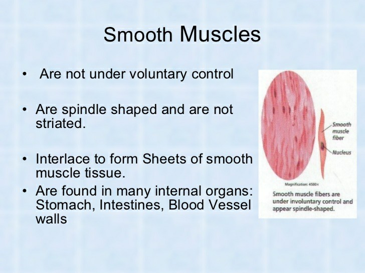 Muscle Under Voluntary Control Pictures Wallpapers